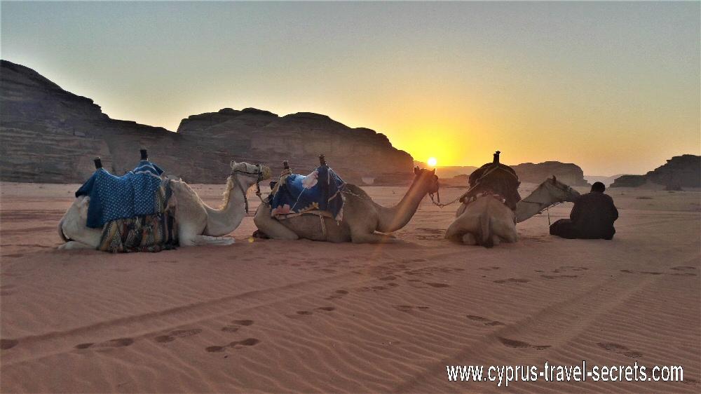 sunrise camel trek wadi rum jordan