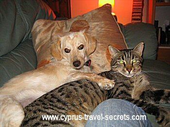 cat and dog cuddle