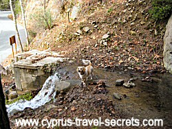 cyprus mountain stream