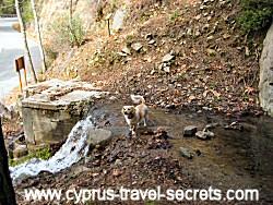 cyprus mountain stream