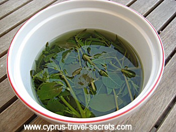 pickling caper leaves