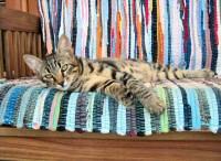 Cyprus cat photo