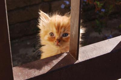 Cute kitten picture - Just too young to survive!