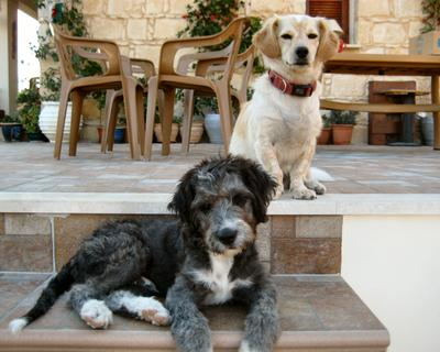 Arni and Rocky