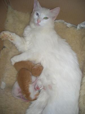 Louis, Bruno and Vanilla 5 days old with their mummy Chanel