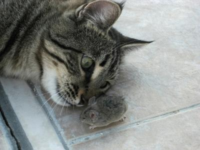 Bengie the cat and the mouse