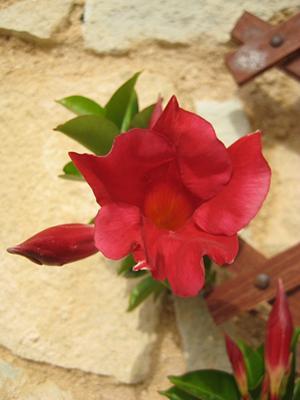 Diplodenia close up photo