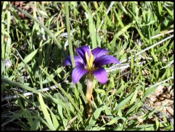 Flower time on the Akamas peninsula