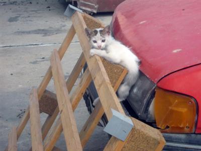 احداث پناهگاه برای گربه ها در ایران