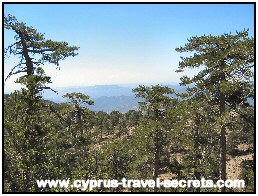 Troodos Cyprus