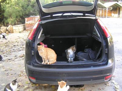 cat picture in car boot