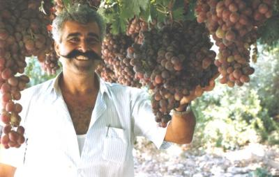 Owner, Matheos Kannavias. The garden side of the restaurant is unique with organically growing grape vines, figs trees, roses and many vegetables, where someone can relax, while having a drink, lunch or dining.