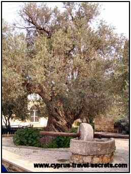 Ancient olive press