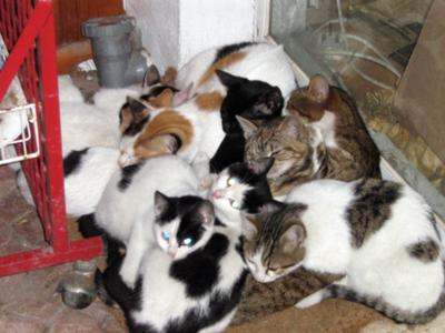 winter time stray cats sleep together