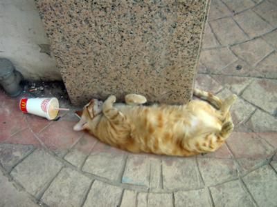 Tired Cyprus cat!