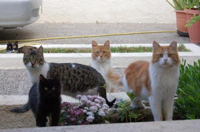 Stray cats picture -  waiting for breakfast in Cyprus